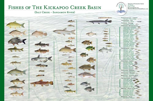 Friends of kickapoo creek create fish poster prairie for Illinois fish species