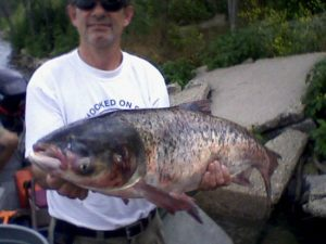 Bighead carp captured in Lake Calumet, 6/23/10 (IDNR)