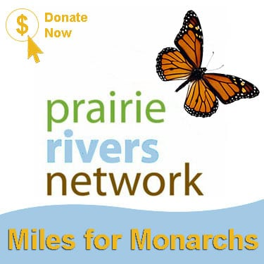 Donate now to help the Monarch!