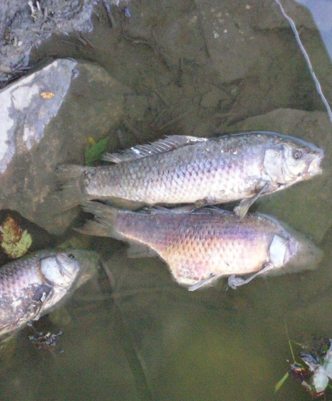 Illinois hog facility fined for fish kill prairie rivers for Illinois fish farms