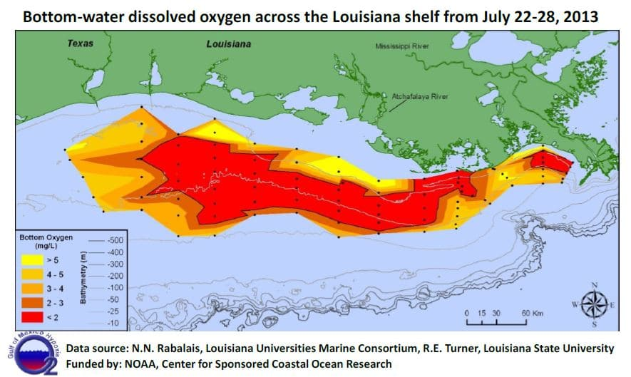 an overview of the pollution problem in the dead zone in the gulf of mexico Pbs learningmedia video for science the size of the gulf of mexico dead zone varies each year also contribute to water pollution and the hypoxia in the gulf.