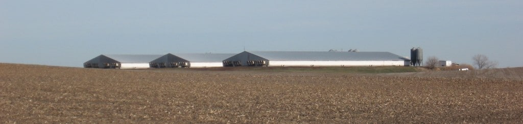 An example of what a large hog factory farm looks like.