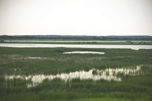 The Sue and Wes Dixon Waterfowl Refuge