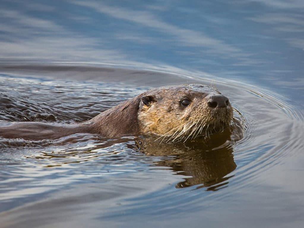 river-otter-1024x768