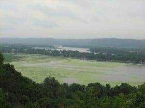 Algae bloom in Mississippi River floodplain