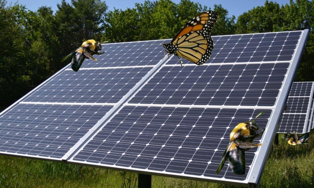 Habitat Potential On Solar Farms Prairie Rivers Network